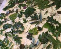Отчет Мастер-класс Окрашивание растениями в стиле «Эко». Ольга Алонсо.